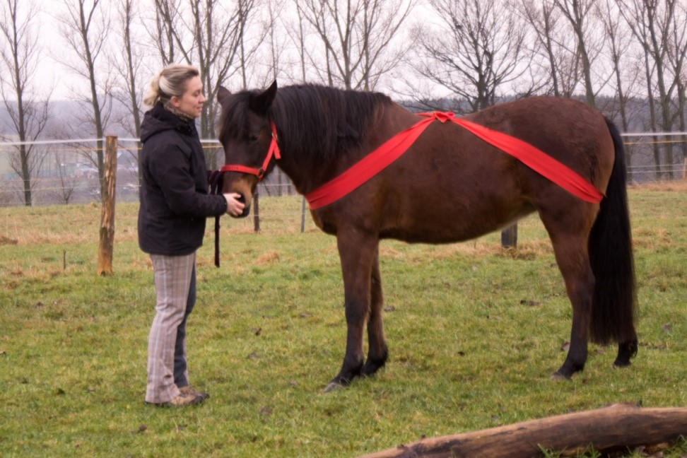 Wie bekomme ich ein pferd vom boden aus in eine korrekte for Boden heuraufe pferd